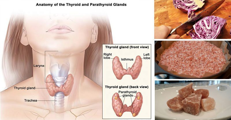 An Underactive Thyroid Can Cause Weight Gain Cancer And More