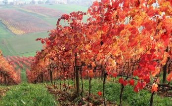 Time to take advantage of your fall harvest
